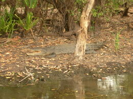 Photo of Darwin Kakadu Day Tour from Darwin including Ubirr Art Site and Mary River Wetlands Cruise Yellow Water