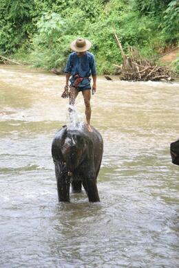 Photo of Chiang Mai Chiang Dao Elephant Jungle Trek and Ping River Rafting Tour from Chiang Mai Balance