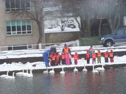 Photo of   Children feeding swans in Reykjavik