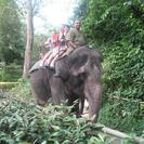 Photo of Singapore Singapore Zoo Morning Tour with optional Jungle Breakfast amongst Orangutans Elephant Ride