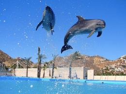 Photo of Los Cabos Swim with the Dolphins in Cabo San Lucas High in the sky