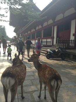 Photo of Kyoto Nara Afternoon Tour of Todaiji Temple, Deer Park and Kasuga Shrine from Kyoto Nara