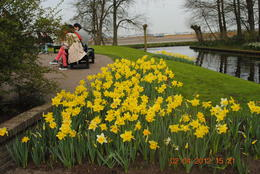 Another one of the many beautiful parts of the vast Keukenhof Gardens , Catherine C - May 2012