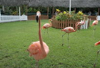 Photo of Nassau Ardastra Gardens, Zoo & Conservation Park