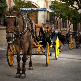 Horse carriage in Seville - June 2011