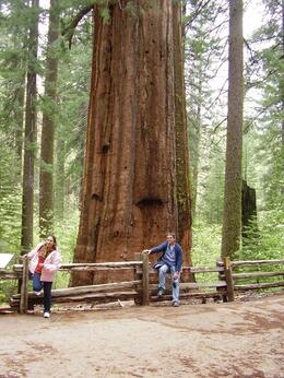 Photo of San Francisco Yosemite National Park and Giant Sequoias Trip King Size Tree.......