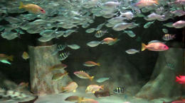 Photo of Phoenix SEA LIFE Aquarium Arizona SEA LIFE Arizona