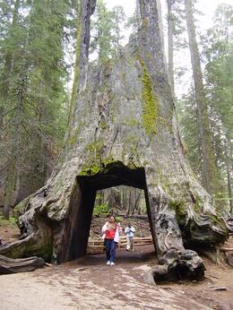 Photo of San Francisco Yosemite National Park and Giant Sequoias Trip A monument of wood