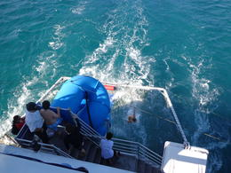 Photo of Sydney Port Stephens Day Trip with Dolphin Watching, Sandboarding and Australian Wildlife Dolphin watch