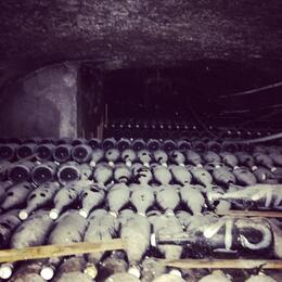 Photo of Paris Champagne Region Day Trip from Paris Dusty bottles that are still aging and not ready to be consumed.