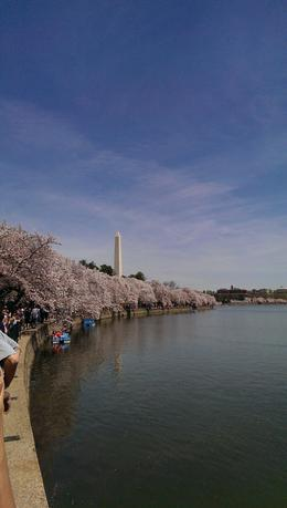 Photo of New York City Washington DC Day Trip from New York 4/12 Trip Cherry Blossoms