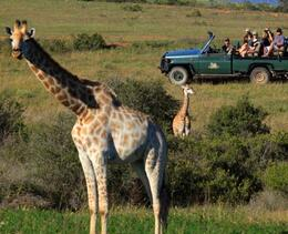 Photo of Cape Town 4-Day Garden Route Tour from Cape Town 4x4 BIG 5 Game Drive Safari