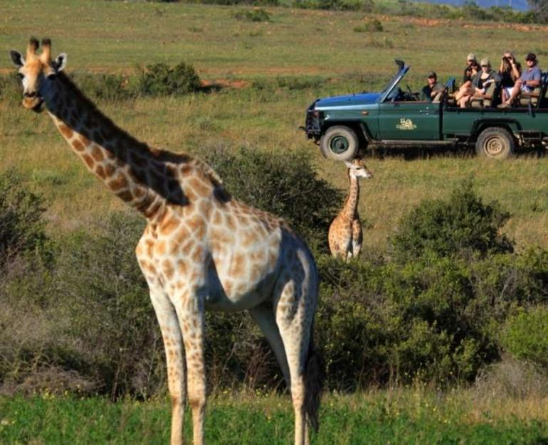 4x4 BIG 5 Game Drive Safari - Cape Town