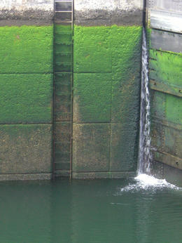 Closeup shot of mossy walls within the locks with water low. Really beautiful in its own way - my very favorite shot! , skigirlsf - July 2011
