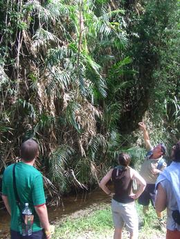 The rainforest walk on the way to Niau Falls - January 2010