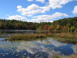 Photo of   Fall foliage around a beautiful country lake.