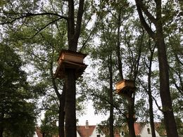 Monk's tree top retreat in Brugge , Tony V - September 2015