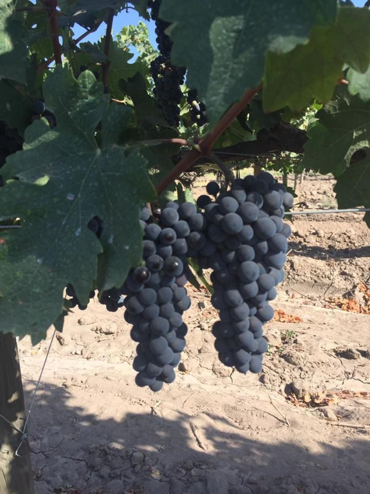 Maipo Valley and Santa Rita Wine Tour by Bicycle with Tastings