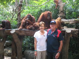 Photo of Singapore Singapore Zoo Morning Tour with optional Jungle Breakfast amongst Orangutans Breakfast with my relatives, I really like his cap.