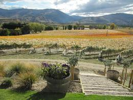 View from Bannockbrae winery, Central Otago - May 2010