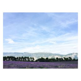 lavender fields and luberon mountain in the back , Gabriela F - July 2015