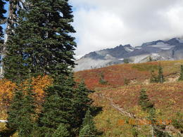 Photo of Seattle Mt Rainier Day Tour from Seattle colours of autumn