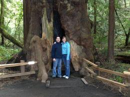 Photo of San Francisco Muir Woods, Giant Redwoods and Sausalito Half-Day Trip I think we can park our car in here.