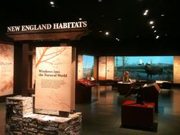 Photo of   New England Habitats