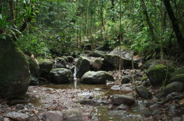 Rainforest Tour -