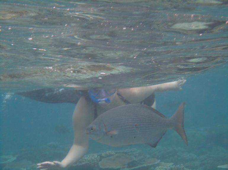 Snorkling - Cairns & the Tropical North
