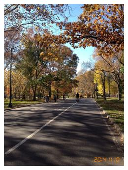 The quieter part of Central Park which you can see with cycle hire , Lynn R - November 2014