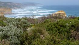 Coastline facing east and the low foliage on the cliff tops, Susan H - November 2010