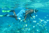Photo of Montego Bay Montego Bay Marine Park