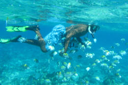 Photo of   Snorkeling, Montego Bay Marine Park