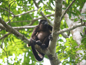 3-Day Amazon Jungle LodgeTour