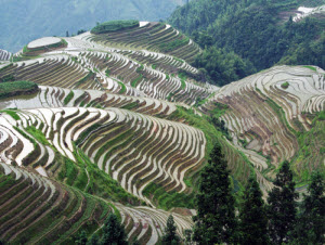Private Tour: Longsheng Culture and Longji Rice Terraces