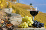 Wine Tasting in Tuscany from Florence