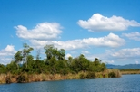 Wildlife Safaris on Jamaica's Black River