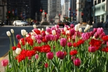 Chicago in Spring – Things to do