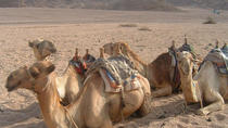 Egyptian Deserts Tours