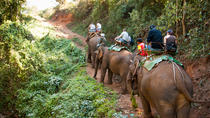 Elephant Rides in Chiang Mai