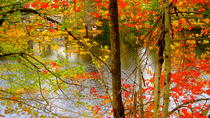 Fall Foliage Tours from Boston
