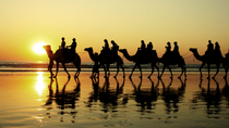 Camel Tours in Broome