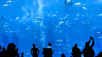 The Lost Chambers Aquarium in Atlantis, The Palm