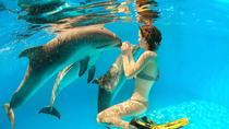 Dolphin Encounters in the British Virgin Islands
