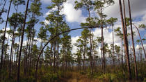 Best Hiking and Biking Trails in the Everglades