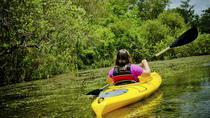 Kayaking and Canoeing in the Everglades