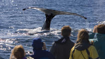 Whale Watching in Perth