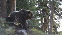 Grouse Mountain Refuge for Endangered Wildlife