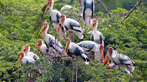 Keoladeo National Park (Bharatpur Bird Sanctuary)